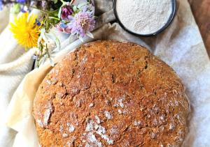 Ajdov kruh s semeni brez gnetenja
